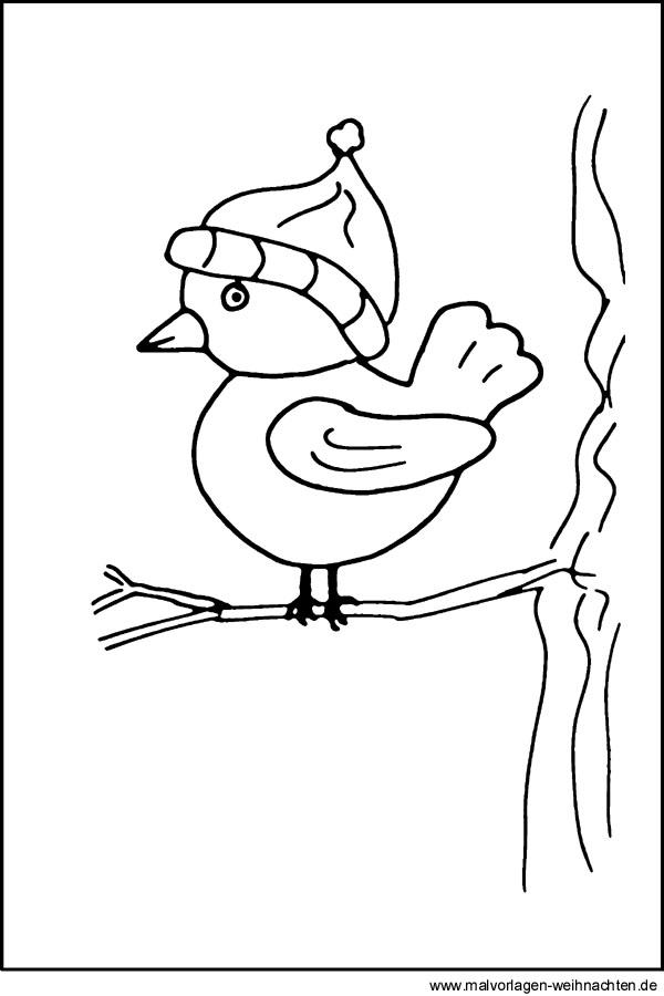 Malvorlage Vogel - Kostenlose Ausmalbilder und Window ...
